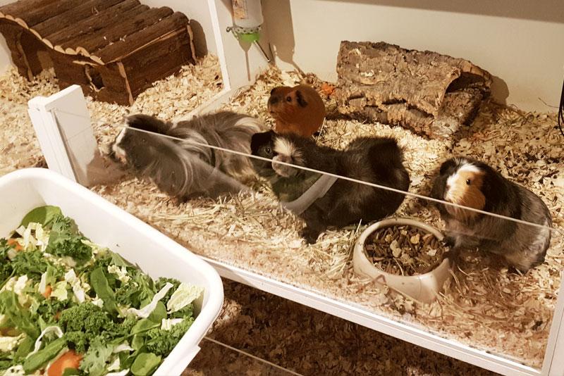 Basil-og-pigerne-får-aften-grønt