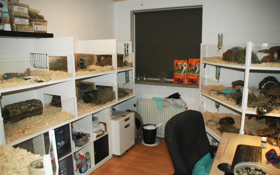 """""""Projekt marsvin rum – part 1"""" er klar til gæster!"""